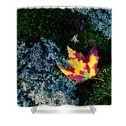 A Maple Leaf Lies On A Bed Of Moss Shower Curtain