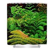 A Mass Of Ferns Shower Curtain
