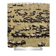 A Migrating Herd Of Wildebeests Shower Curtain