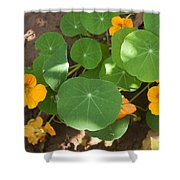 A Mix Of Orange Flowers And Round Green Leaves With Sun And Shadow Shower Curtain