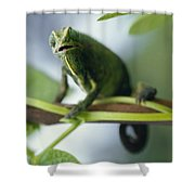 A Montane Side-striped Chameleon Shower Curtain
