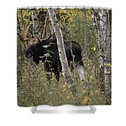 A Moose Alces Alces Americana With An Shower Curtain