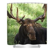 A Moose Shower Curtain by Ernie Echols