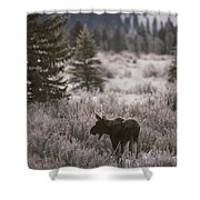 A Moose In A Frost-covered Field, Grand Shower Curtain