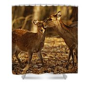 A Mother And Fawn Sika Deer Shower Curtain