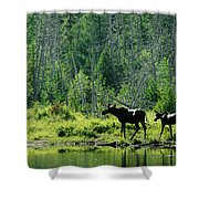 A Natural Salt Lick Lures Moose Shower Curtain