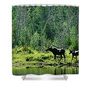 A Natural Salt Lick Lures Moose Shower Curtain
