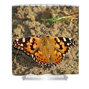A Painted Lady Looking For Sex 8619 3369 Shower Curtain