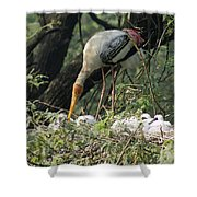 A Painted Stork Feeding Its Young At The Delhi Zoo Shower Curtain