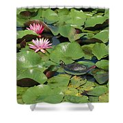 A Painted Turtle Rests On A Water Lily Shower Curtain