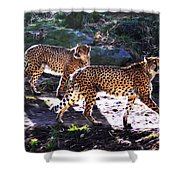 A Pair Of Cheetah's Shower Curtain