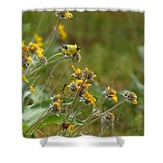 A Pair Of Goldfinches In Spokane Shower Curtain