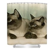 A Pair Of Siamese Cats Shower Curtain
