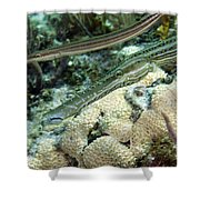 A Pair Of Trumpetfish Off The Coast Shower Curtain