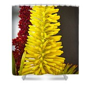 A Pair Of Yellow And Red Shower Curtain