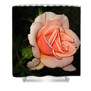 A Peach Of A Rose Shower Curtain