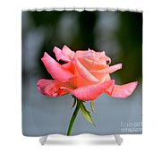 A Peachy Pink Delight Shower Curtain