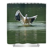 A Pelican Drying Its Wings After Landing In The Lake Inside Delhi Zoo Shower Curtain