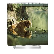 A Pet Dog Sits In The Shallow Water Shower Curtain