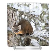 A Pine Marten Looks For Food Shower Curtain