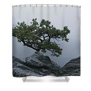 A Pine Tree Clings To A Rocky Ridge Shower Curtain