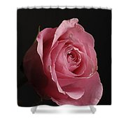 A Pink Rose Rosaceae Shower Curtain