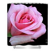 A Pink Rose Shower Curtain