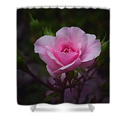 A Pink Rose Shower Curtain by Xueling Zou