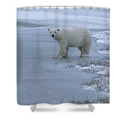 A Polar Bear Stepping Onto Ice Shower Curtain