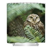A Portrait Of A Captive Burrowing Owl Shower Curtain