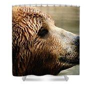 A Portrait Of A Captive Kodiak Brown Shower Curtain