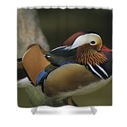 A Portrait Of A Mandarin Duck Shower Curtain