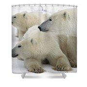 A Portrait Of A Polar Bear Mother Shower Curtain