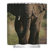 A Portrait Of An African Elephant Shower Curtain