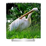 A Preening Stork Shower Curtain