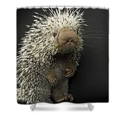 A Prehensile-tailed Porcupine Coendou Shower Curtain