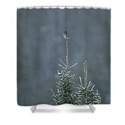 A Pygmy Owl Perched In The Top Of An Shower Curtain