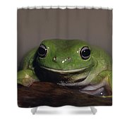 A Queensland Subspecies Of Green Tree Shower Curtain