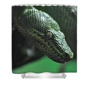 A Real Reptile Shower Curtain
