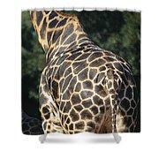 A Rear View Of A Rothschild Giraffe Shower Curtain