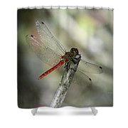 A Red Dragonfly Shower Curtain