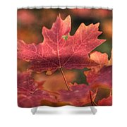 A Red Fall  Shower Curtain