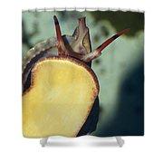 A Red Lip Triton Snail Charonia Shower Curtain
