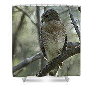 A Red Shouldered Hawk Perches In A Tree Shower Curtain