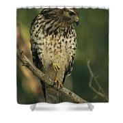 A Red Shouldered Hawk Perches On A Tree Shower Curtain