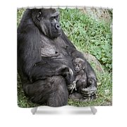 A Relaxed Western Lowland Gorilla Shower Curtain