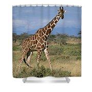 A Reticulated Giraffe On A Samburu Shower Curtain