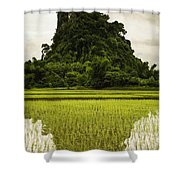 A Rice Field In Asia Shower Curtain by Nathan Lau