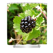 A Ripe Blackberry Shower Curtain