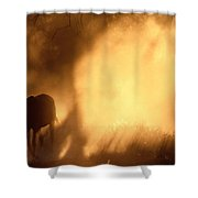 A Roaming Horse In Montana Shower Curtain
